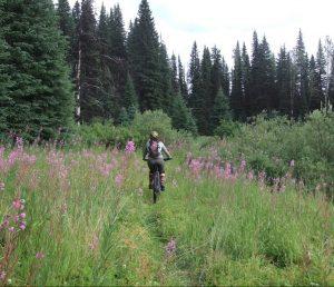 Mountain biking on the trails near Wells, BC